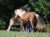 Horses,-May,-09-062