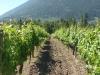 Recline Ridge Vineyards & Winery